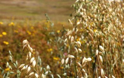 The development of Crop Rotation